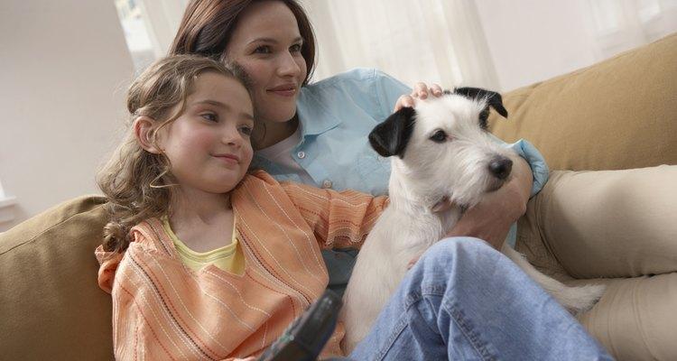 Perro sentado en el sofá con sus dueños.