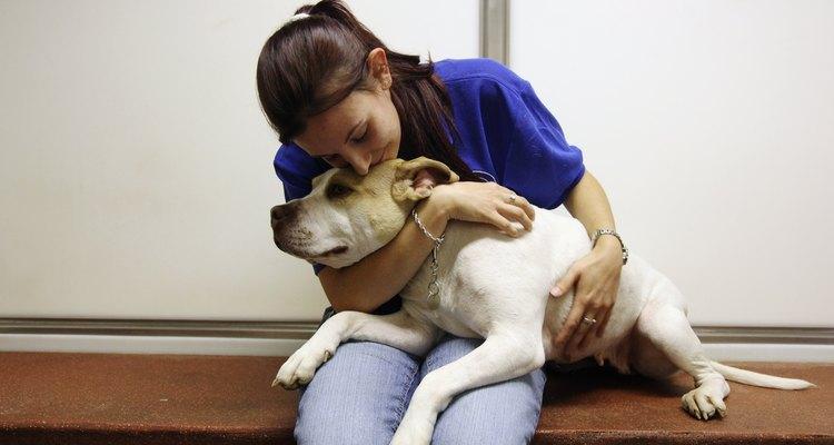 Muchos pitbulls son decomisados o abandonados en albergues y antirrábicos.