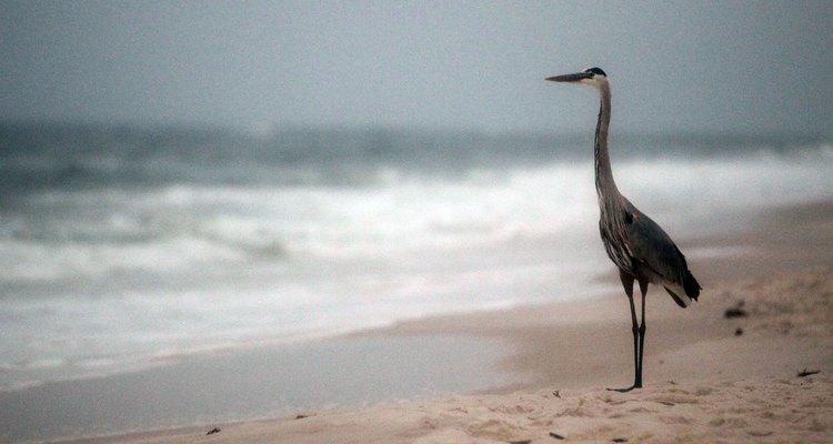 Pássaros e outros animais selvagens têm vários problemas de saúde depois de um derramamento de óleo