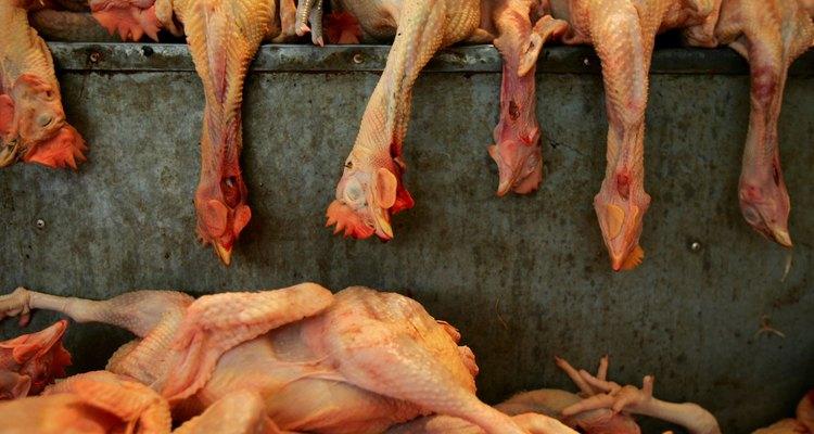 O atordoamento torna os frangos inconscientes antes da morte