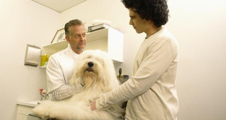 Los asistentes veterinarios juegan un papel activo en cualquier práctica veterinaria.