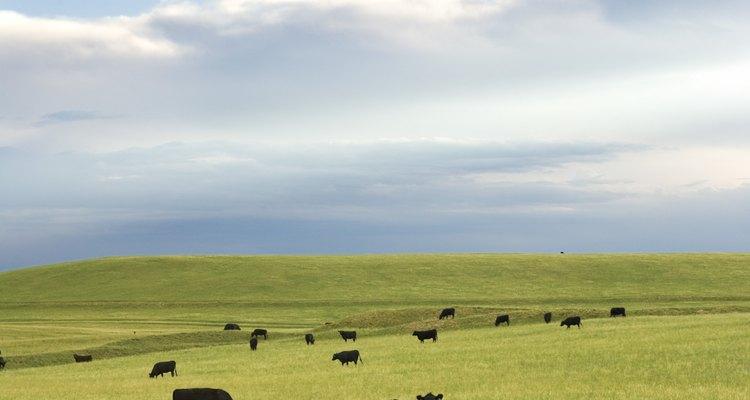 Una tierra seca y pobre en nutrientes es menos capaz de soportar vida.