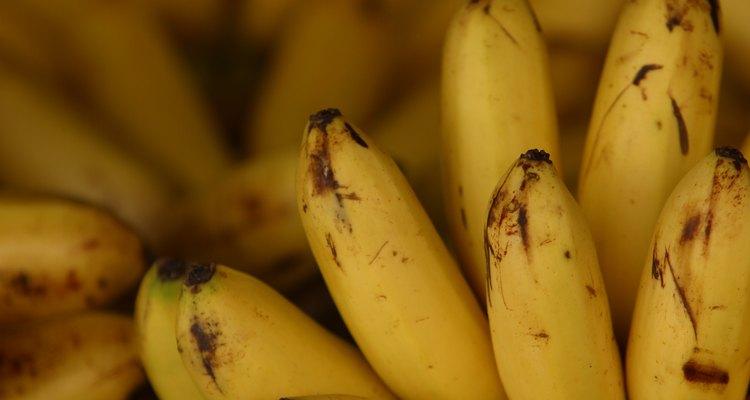 As bananas são um alimento básico na dieta de uma ave sul-americana