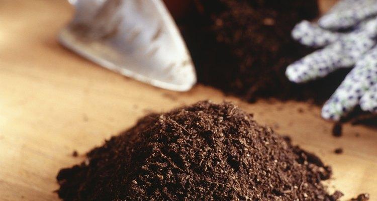 Llena una maceta con mezcla de arena y tierra.