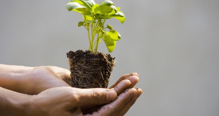 Procure sempre por produtos fabricados de forma sustentável