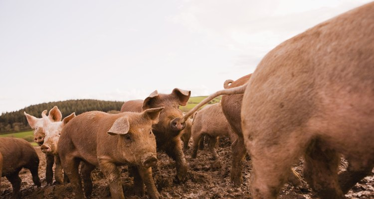 Jesus' Jewish audience considered pigs to be unclean.