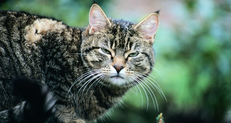 Feeding an elderly or sick cat can be a challenge, and flavour enhancers can help.