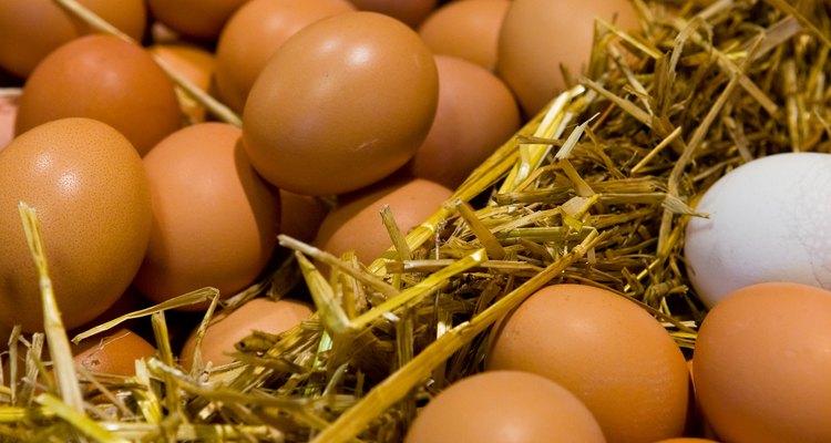 Ovos combinam com quase qualquer tempero ou erva