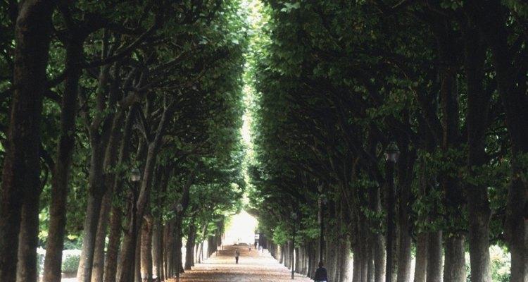 Uma das avenidas arborizadas para desfrutar o Jardim das Tulherias