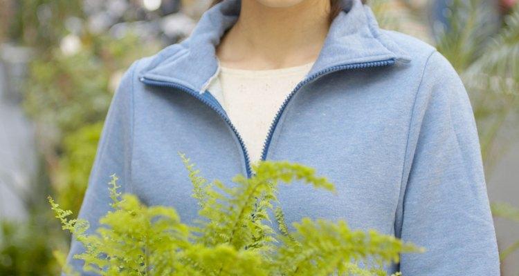 Los helechos son plantas domésticas comunes.