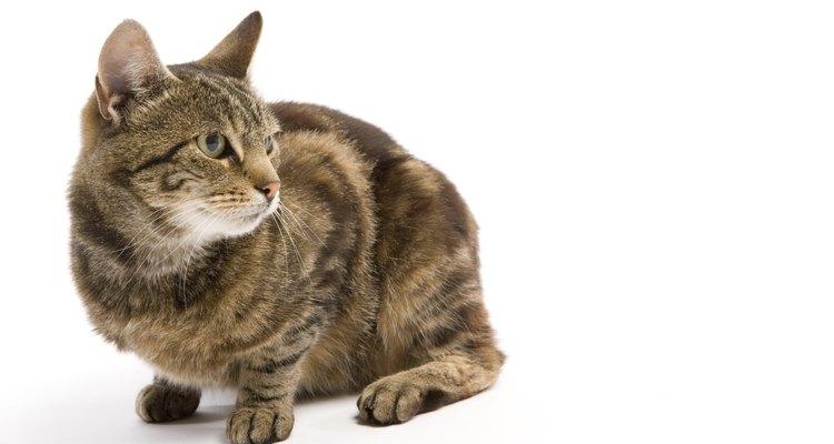 Gatos estressados podem ser tratados com ervas medicinais