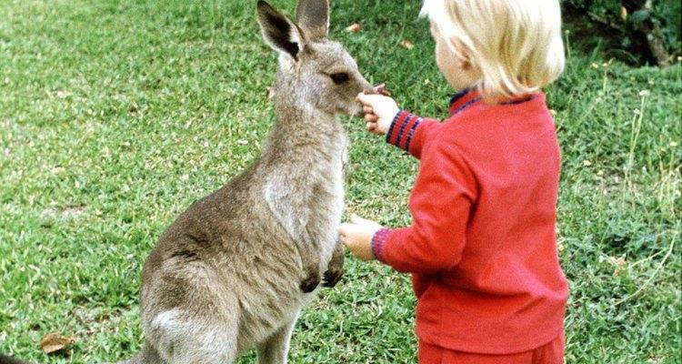 Comparte un encuentro canguro con tu hijo.