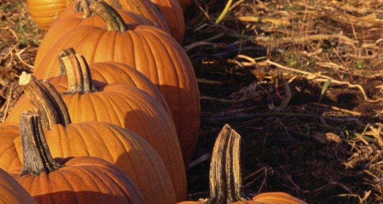 Use herbicidas para proteger suas abóboras contra plantas invasivas