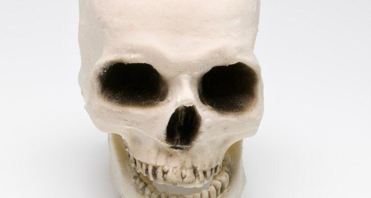 Modelos crânio podem ser feitos a partir de uma receita caseira simples