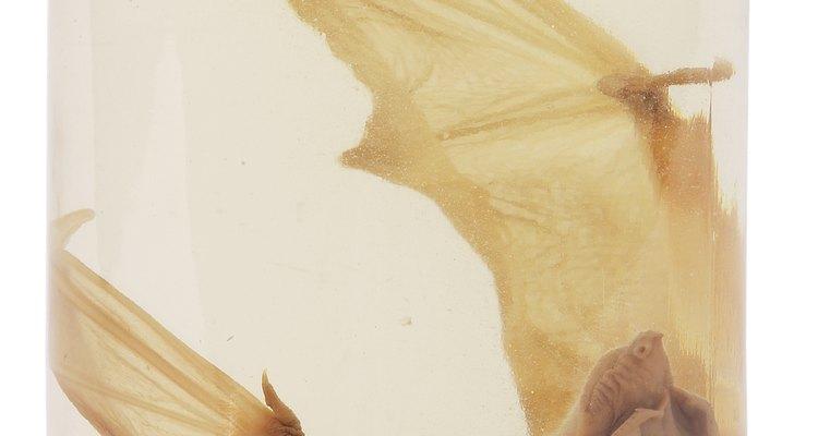 Puede ser que no te gusten los murciélagos, pero sirven para desempeñar una importante función en esta vida.