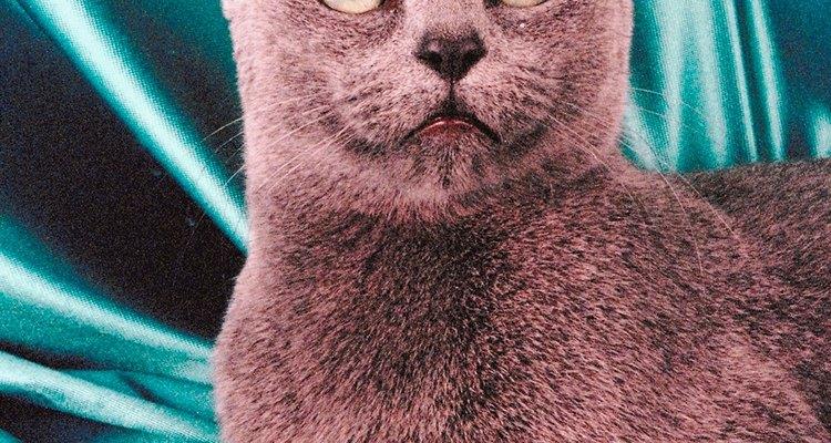 El gato curioso.