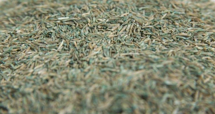 Asegúrate de saber durante cuánto tiempo estuvieron almacenadas tus semillas de pasto.