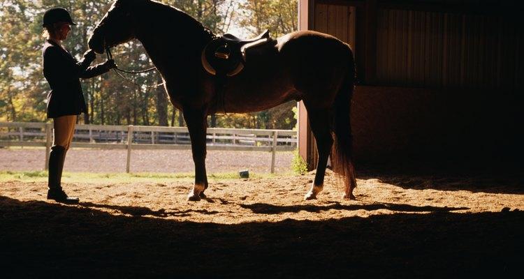 Practica con un caballo de confianza.
