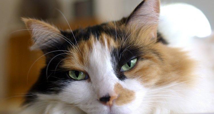 Luego de una castración, tu gato necesitará ayuda para recuperarse.