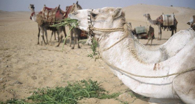 Na antiga Israel, por razões de segurança, viajava-se em caravanas
