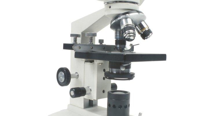 Es importante comprender lo que significa la resolución cuando utilizas un microscopio.