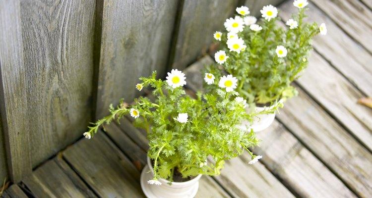 Las plantas requieren ciertas condiciones de crecimiento.