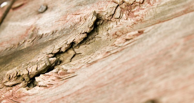 You must treat dry rot without delay.
