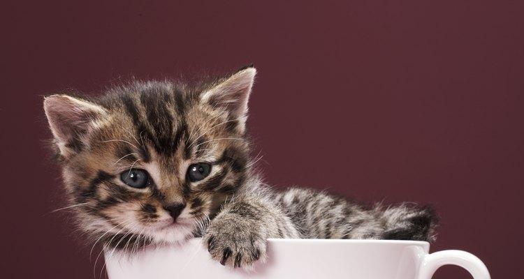 Veja as razões para seu gato estar fazendo cocô fora da caixa