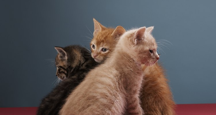 Los gatos pueden orinar sobre telas o alfombras, dejando manchas.