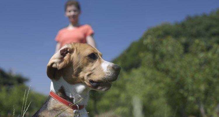 Los perros pueden superar su miedo a la gente con un entrenamiento y paciencia.