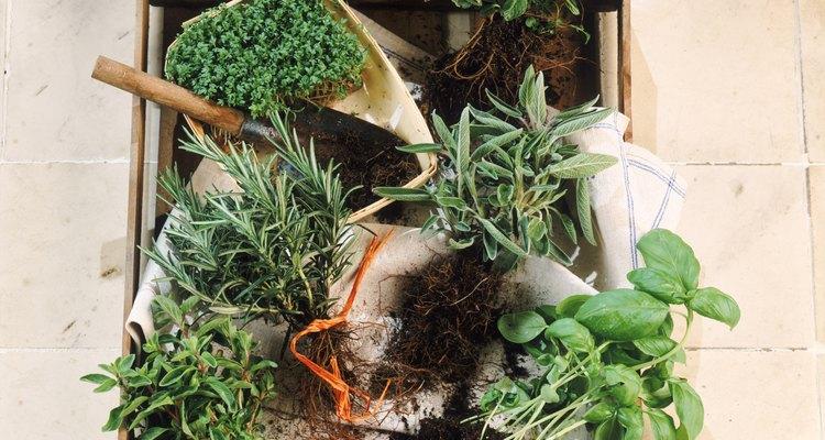 Las hierbas pueden crecer en el suelo y también en macetas.