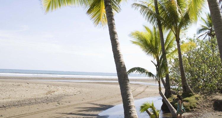 Plante palmeiras em um lugar onde elas receberão luz solar