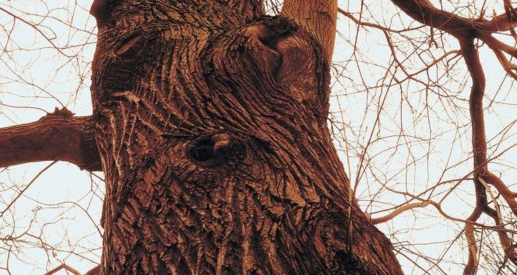 Los árboles en estado de latencia liberan pequeñas cantidades de dióxido de carbono.