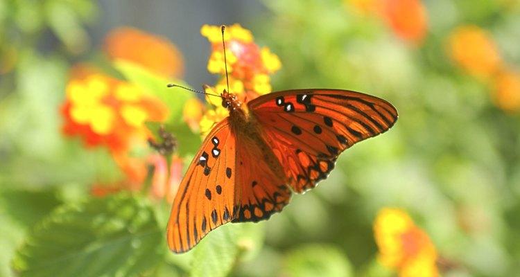 La polinización, el proceso a través del cual se reproducen los naranjos, ocurre durante la floración.