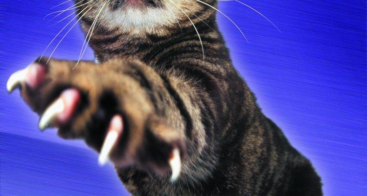 Las garras de tu gato puede dañar seriamente tu sofá de cuero.