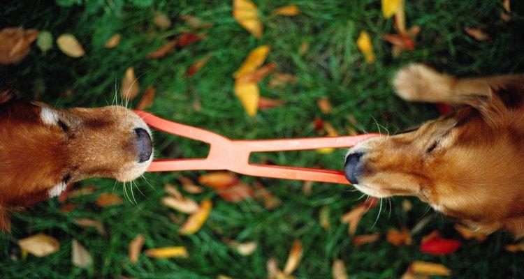 Brinquedos de cachorro