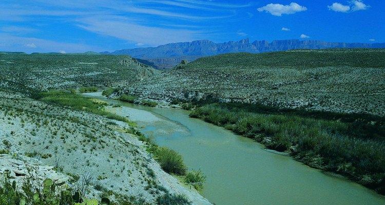 El peyote es nativo de la región del Río Grande.