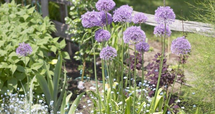 Ervas podem ser cultivadas em vasos ou no jardim