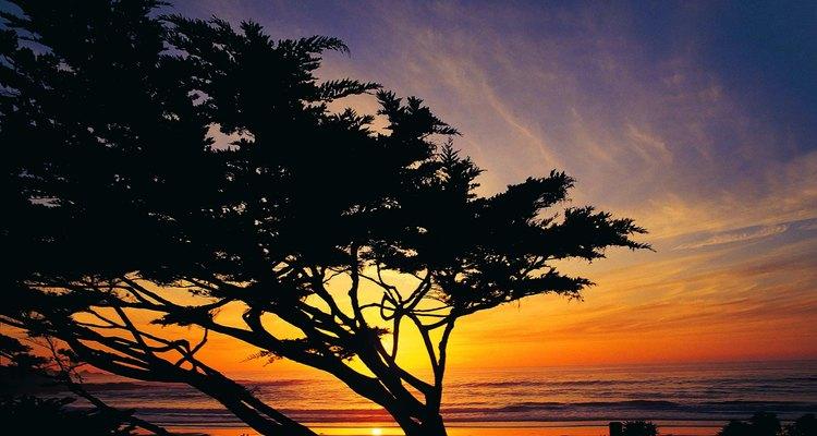 El viento se desliza entre los cipreses a lo largo de la costa de Carmel.