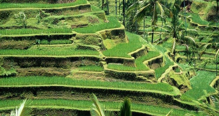El cultivo en terrazas se usa frecuentemente para cultivar arroz en Asia.