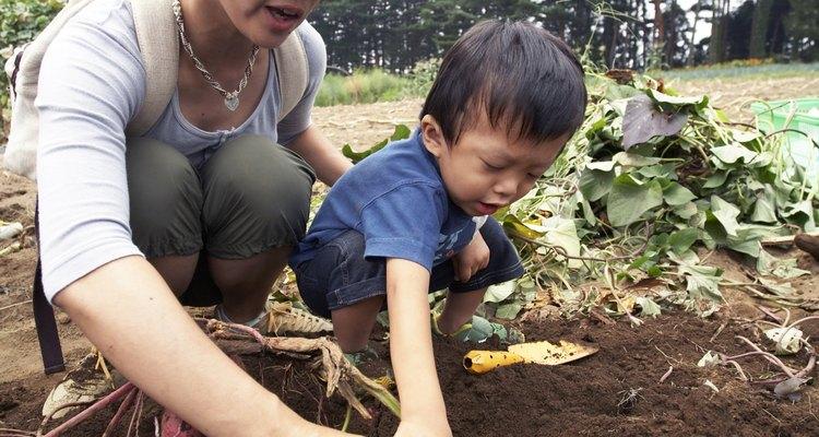 La forma más sencilla de hacer un plantador de camotes es acumular tierra con un azadón para hacer un reborde en tu jardín.