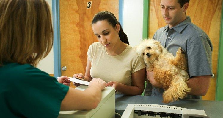 Saber enfaixar a pata de seu cachorro pode acalmar a dor até que possa levá-lo ao veterinário