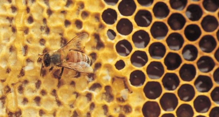 Haz que las abejas se sientan bienvenidas añadiendo aromas de atracción a la colmena de cebo.