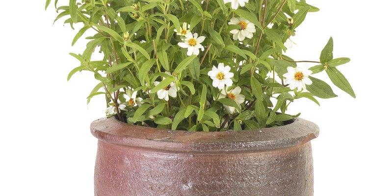 Cultivar plantas de interior es una manera simple y conveniente para disfrutar de toda la estética de un jardín al aire libre en el interior.