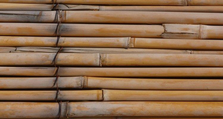 Limpia los hongos del bambú con jabón y agua.