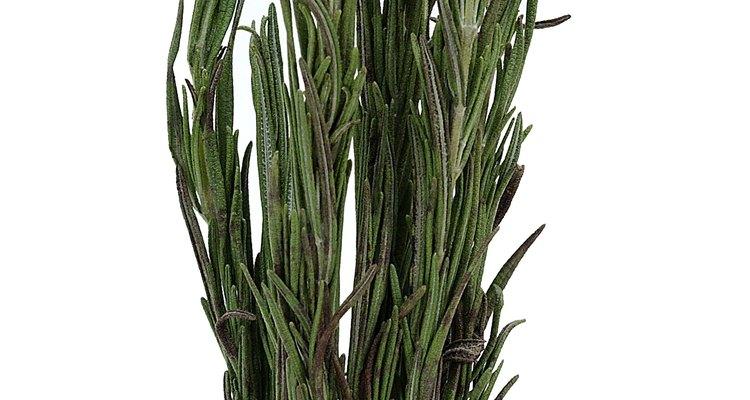 Use folhas frescas ou secas de alecrim em suas receitas