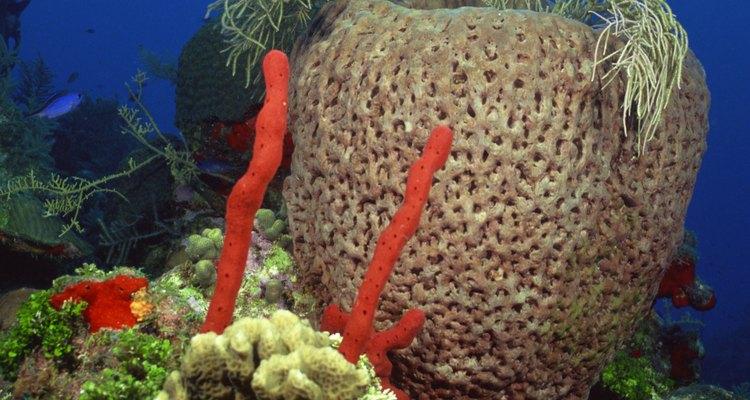 A los pulpos les gusta esconderse en espacios pequeños como dentro de un arrecife o entre rocas.