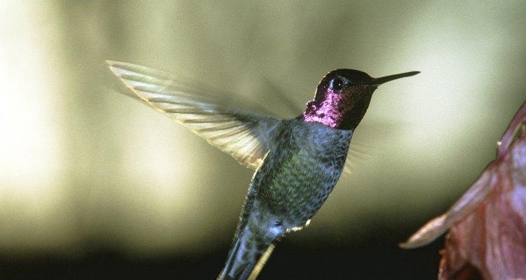 Receita de néctar para beija-flores
