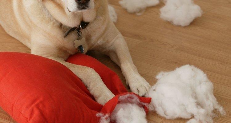 Algumas vezes os cachorros destroem objetos para gastar energia