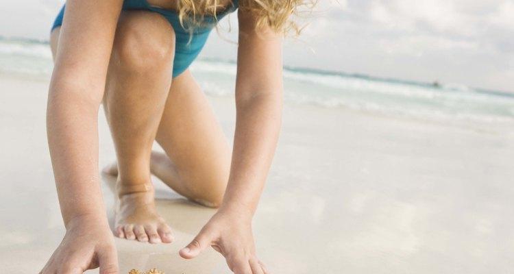 Estrelas-do-mar são lembranças populares de férias na praia, mas precisam ser conservadas corretamente antes de serem colocadas à mostra